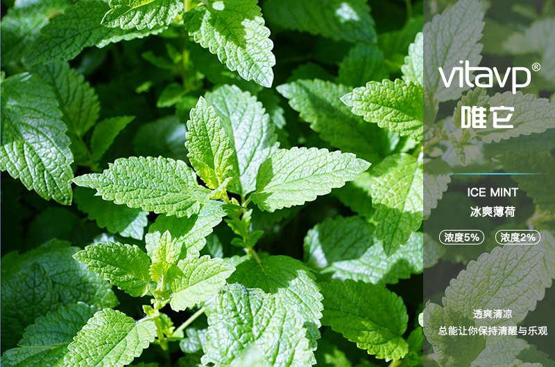 【vitavp唯它】專用電子煙彈 - 冰爽薄荷口味(50mg)3入